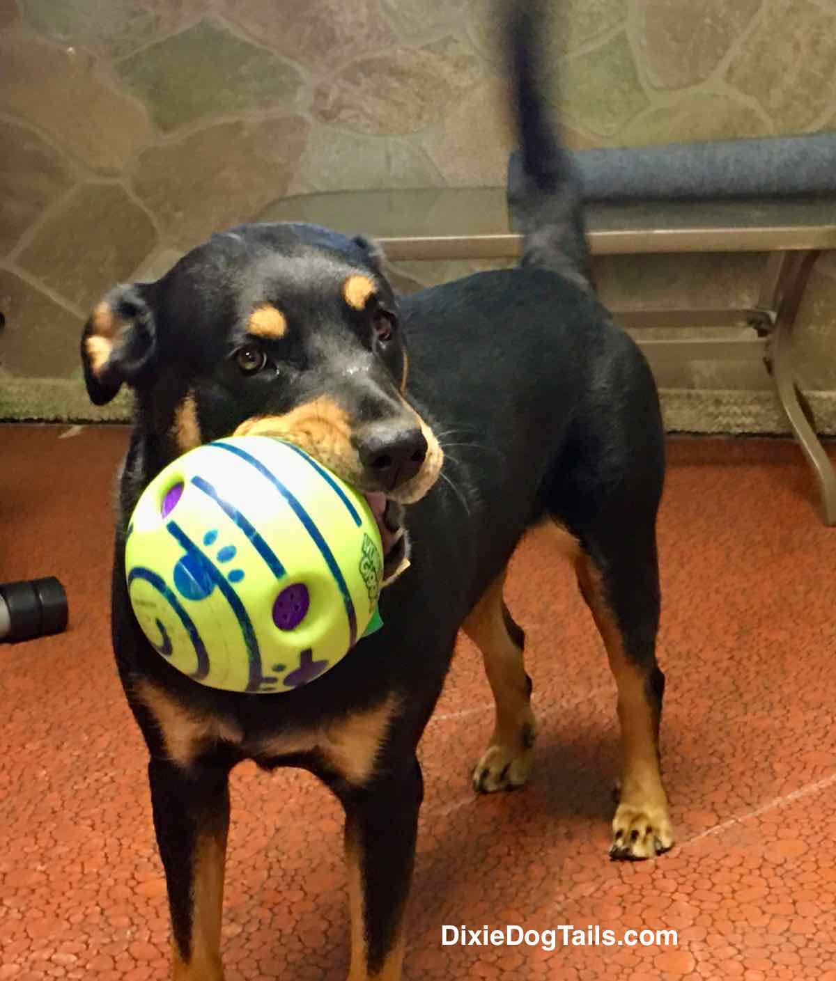 Dog standing with ball in her mouth