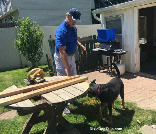 Dog in the yard with man working on a table