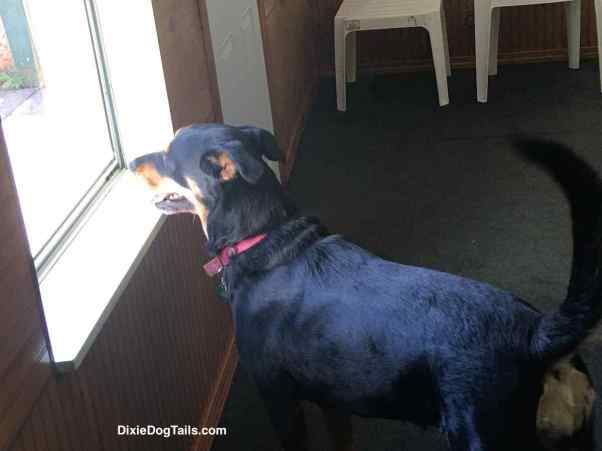 Dog looking out the window