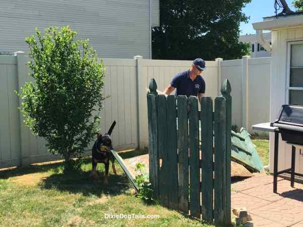 Dog smelling a board while man is working