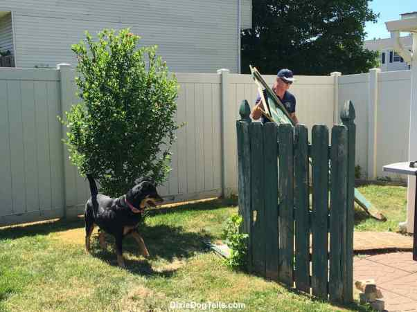 Dog looking at the fence while man is working