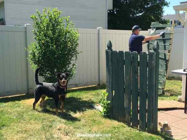 Dog standing in the yard while man is working
