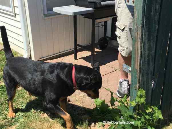 Dog smelling plant