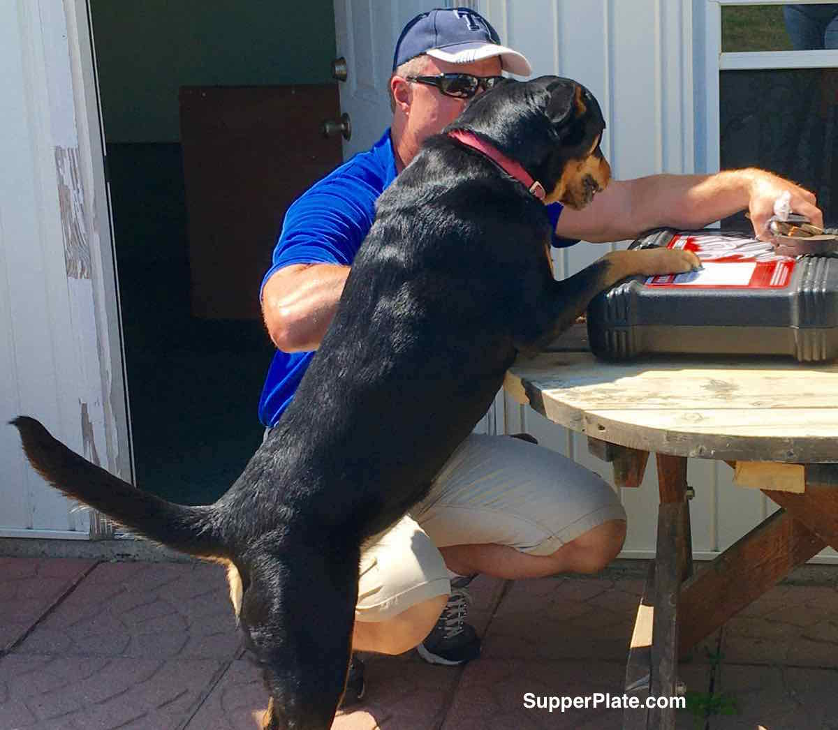 Dog and man looking at a tool box on a table outside